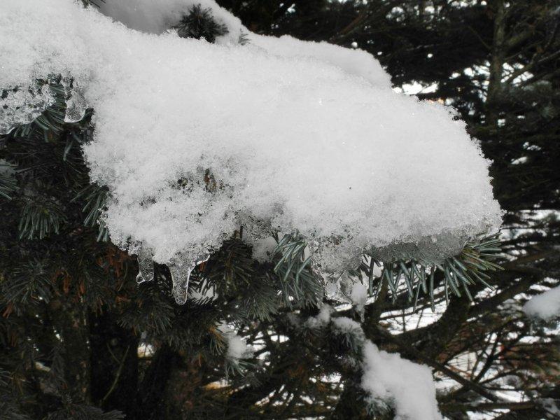 Schnee auf Pflanzen_