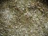 Brennnessel Samen/Blüten Salz