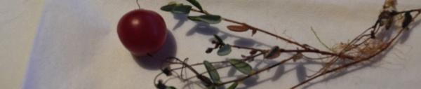 Bärentraube immergrüne (Arctostaphylos uva-ursi)